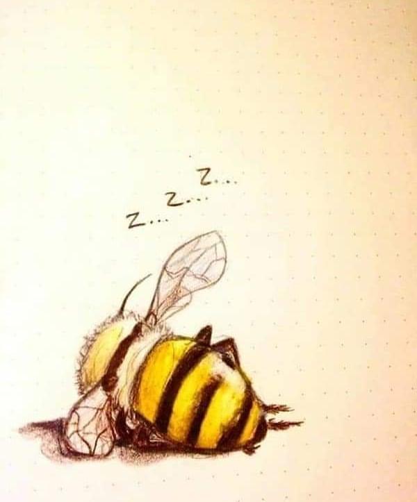 Bee Zzz